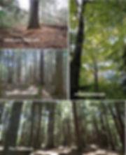 MatureForests_SandyLake_byDavidPatriquin