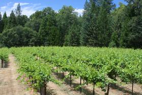 Smith Vineyards
