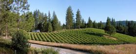 Oso Loco Vineyards