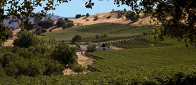 Six Mile Vineyards
