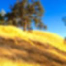 Calaveras: The New Pulse of California Wine Country