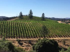 Tailem Bend Vineyards