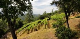 Holley Hill Vineyard