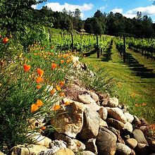 Ayrael Vieux Vineyard