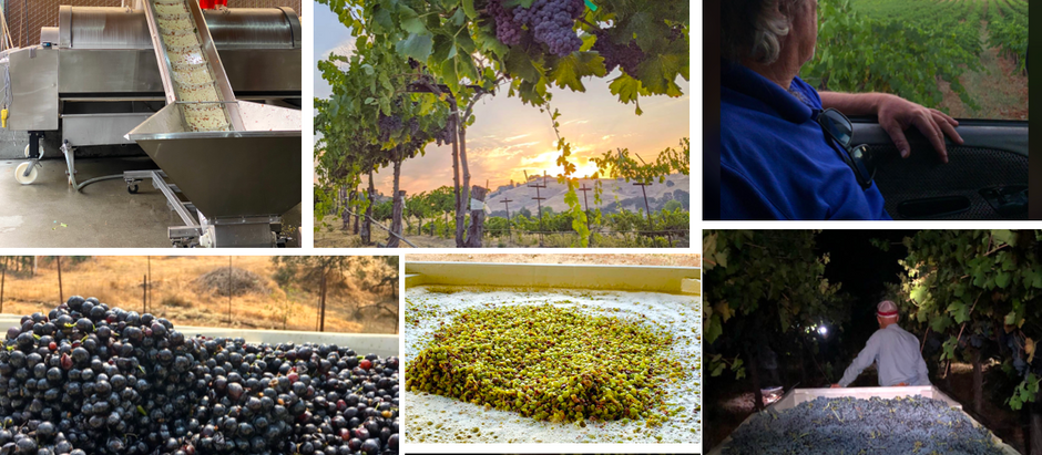 Calaveras Wine Country 2020 Harvest Highlights - Part 1