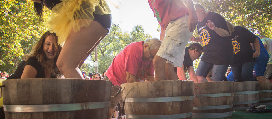 Calaveras Grape Stomp