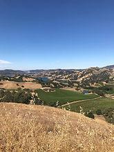 Aloria Vineyards
