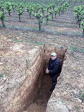 Western Innovator: Managing multiple vineyards