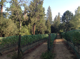Bissell Family Vineyard