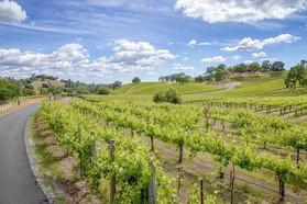 Villa Vallecito Vineyards