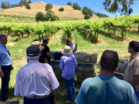 Calaveras Vineyard Tour