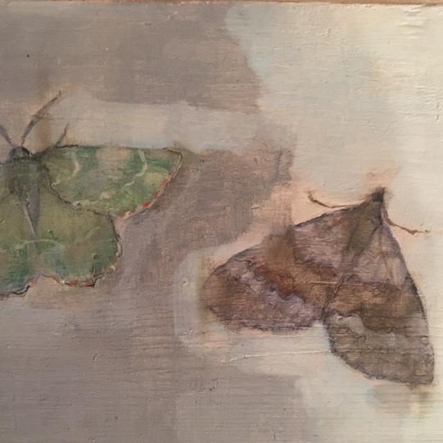 dust moths 2