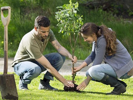 5 Landscape Renovations That Really Pay Off (and 1 That Won't)