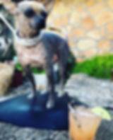 Dog_salty_chihuahua_sotol_terlingua.jpg