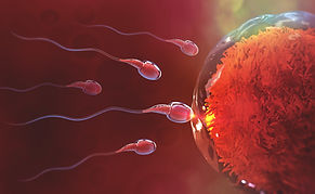sperm to egg