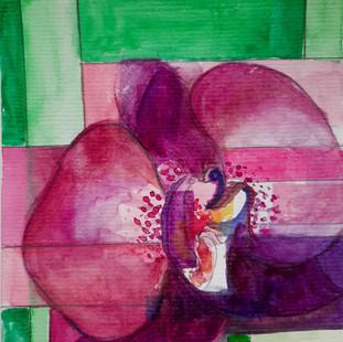 Orchidea - Orchid #1