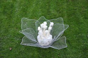 Lumen flower