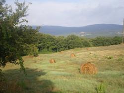 Montagnola Senese (2 KM)