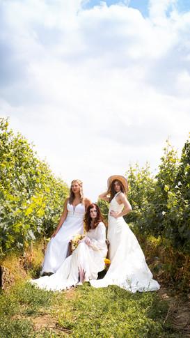 Brides in the Vineyard
