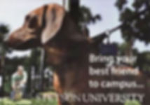 pet friendly colleges