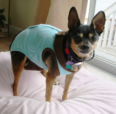 best-dog-diapers.jpg