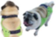 pee-suit-dog-diaper-suspenders.jpg