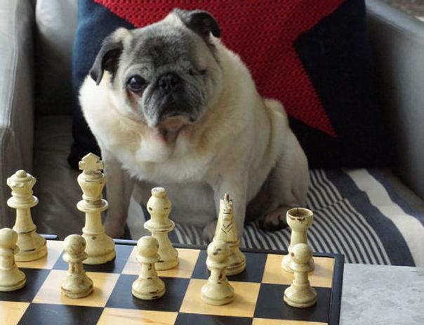dog-owner-life-hack.jpg