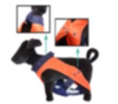 best-diaper-for-dogs.jpg