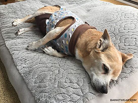 old-dog-incontinence-treatment.jpg