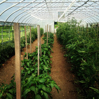 Hoophouse View