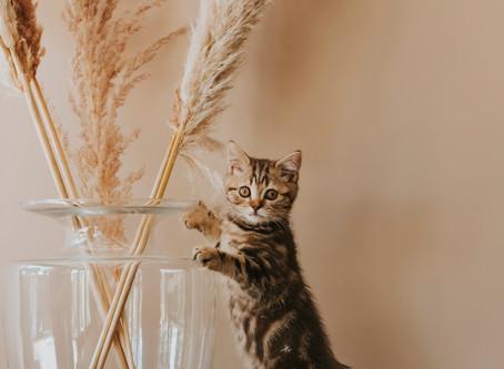Kittenshoot Doerak
