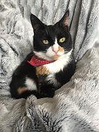 Fifi on Blanket.JPG