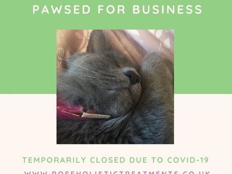 Pawsed for Business