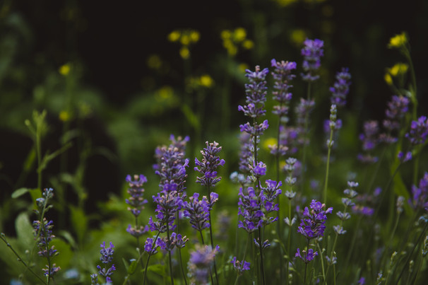 lavender-evergreen-herbal-book-34.jpg