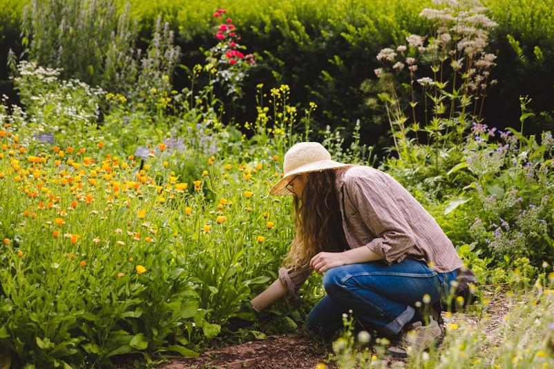 gardening-evergreen-herbal-book-31.jpg