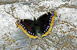 Papillon 2 par Andy.jpg