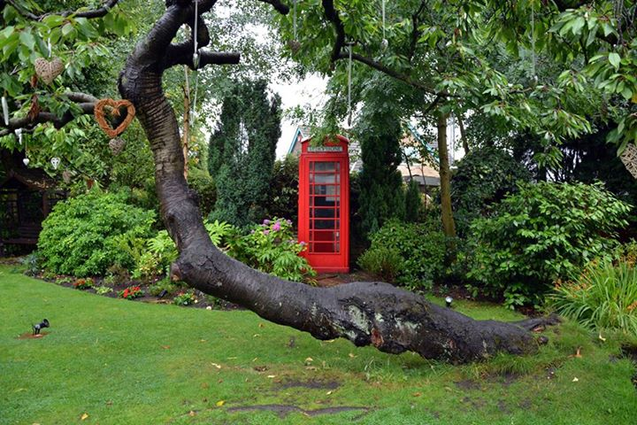 Phone Box n Tree