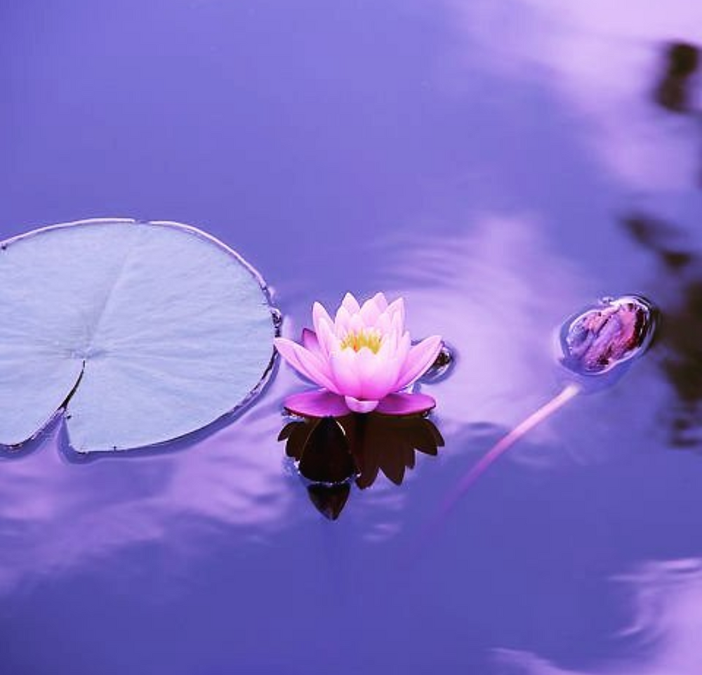 lotusbloem yoga