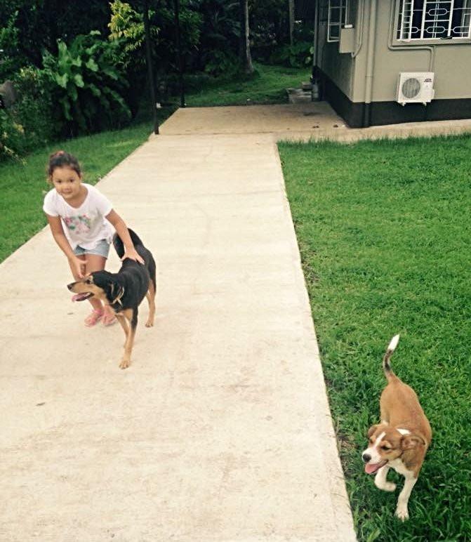 Guard dogs in Fiji - meandfiji, expat living in fiji, keeping safe in Fiji, is Fiji safe