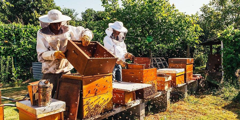 beekeeping-tips-for-september 2.00.jpg