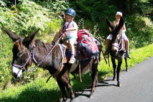 balade avec des ânes dans les gorges de la haute-Dordogne