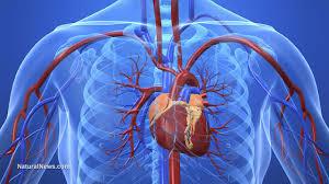 "Beware of American Heart Association ""Standards."""