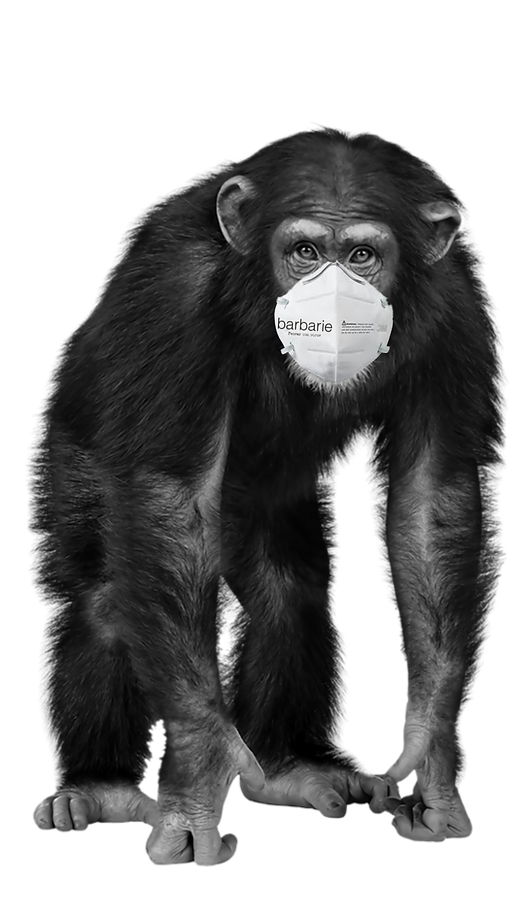 CHIMP MONKEY COVID.png