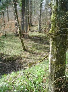 Lehmgrube Bräntähau