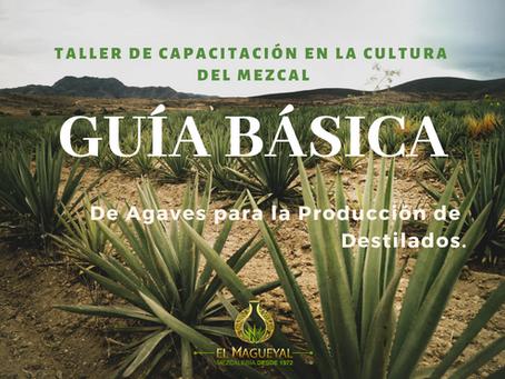 Guía de Agaves y Magueyes Mezcaleros.