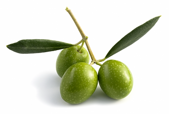 olive_1-700x473.png