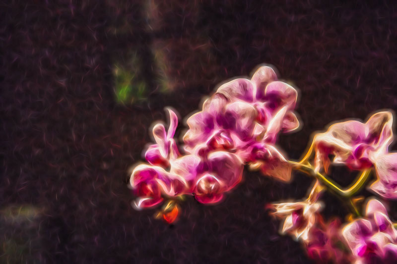 Orchid Glow