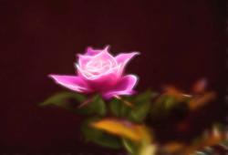 Rose Dreams Two