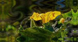 Squash Blossom Wrap