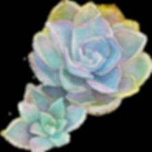kisspng-garden-roses-succulent-plant-acu
